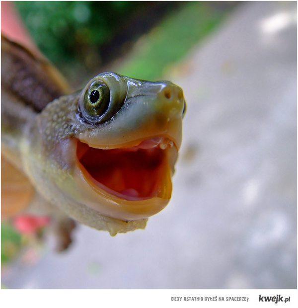Emocje żółwia