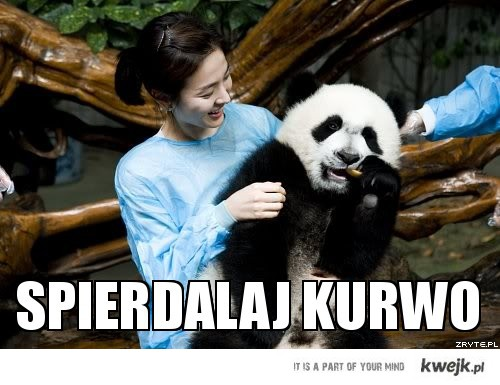 wszyscy lubią pandy
