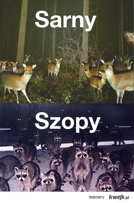 Sarny Szopy