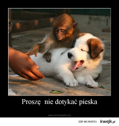 PrOsZę NiE DoTyKaĆ PiEsKa !!!