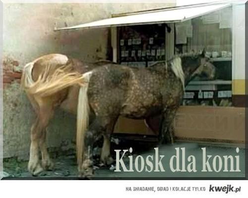 kiosk dla koni