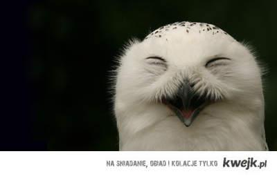 sowa ;]
