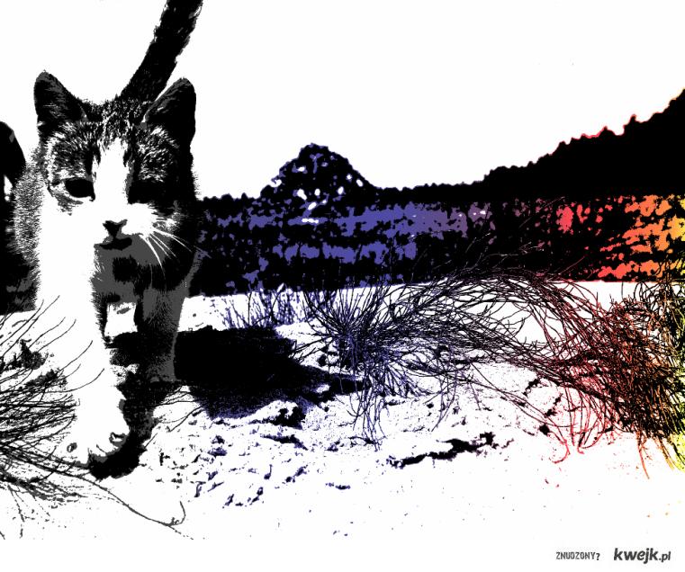 Modern color cat