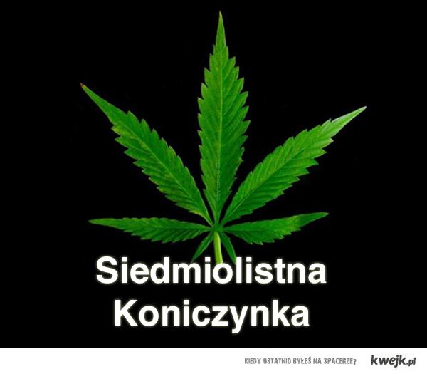 Siedmiolistna Koniczynka