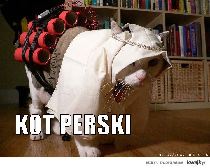 Kot perski