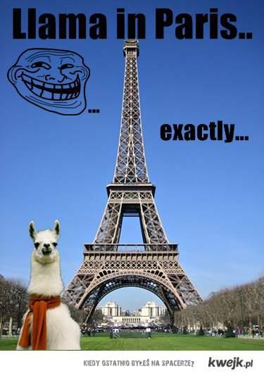 Llama in Paris