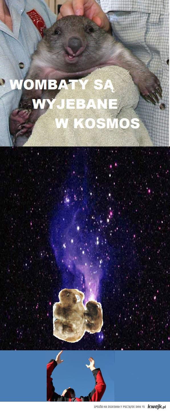 wombaty<3