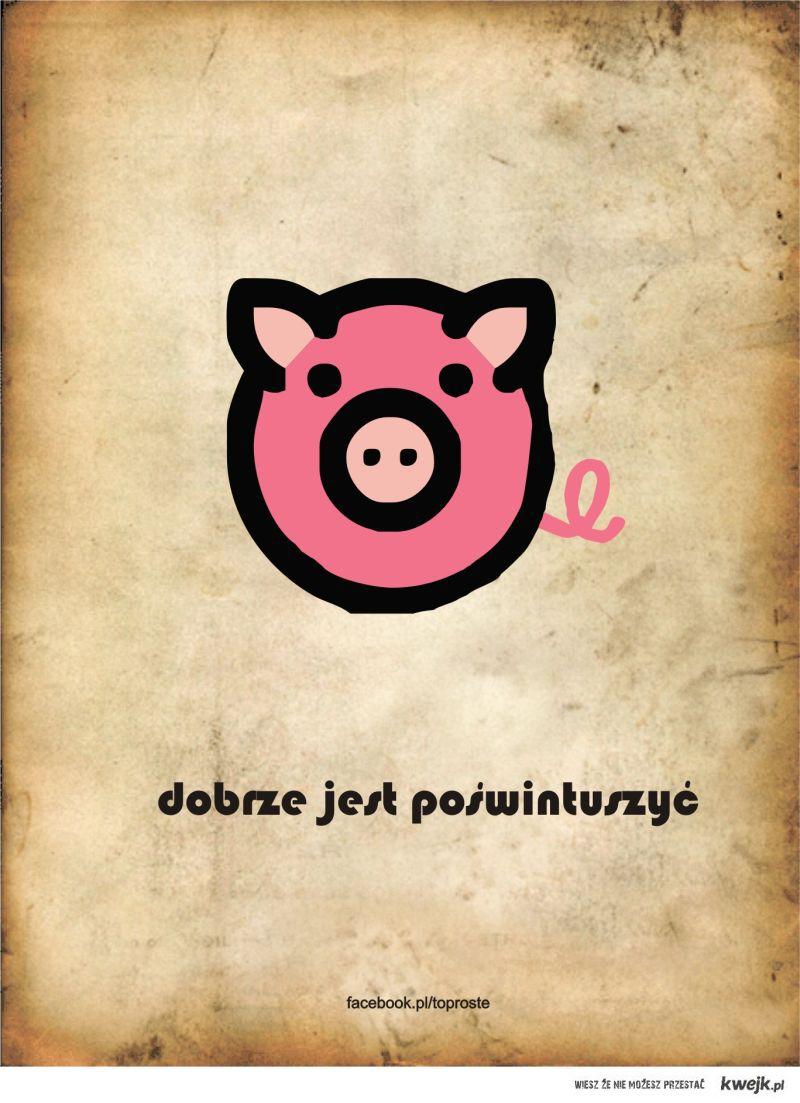 ty świnio