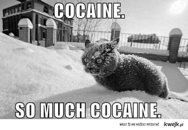 Cocaine, so much cocaine.