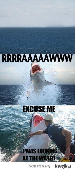 shark, please.
