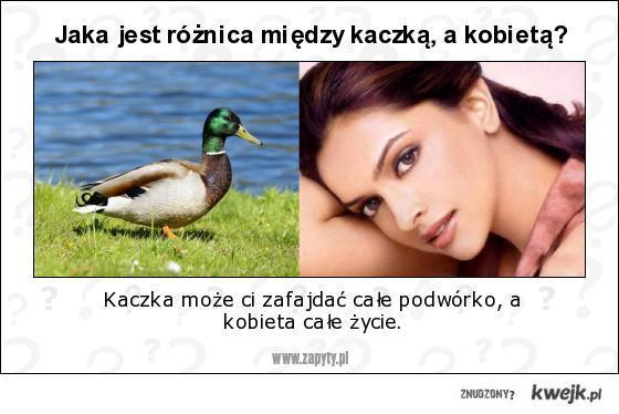 Jaka jest różnica między kaczką, a kobietą?