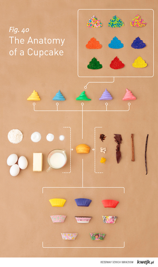 anatomy of cupcakes