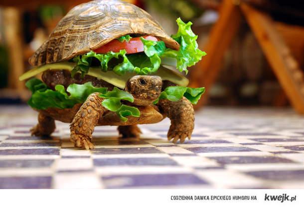 żółwburger