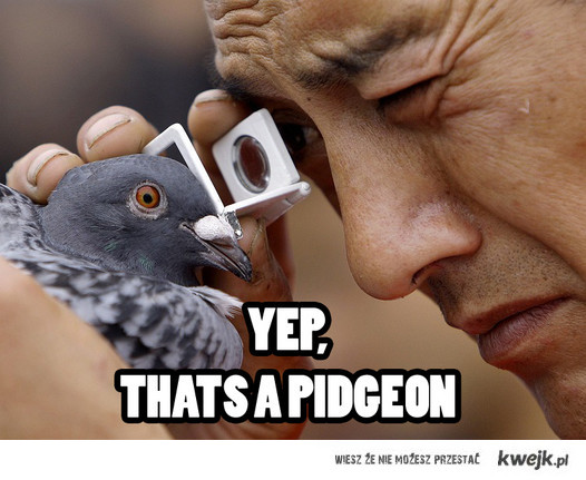 Yep-a pidgeon