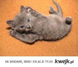 Po prostu kot. Kotoliszka - kotka, która zamienia w kamień.