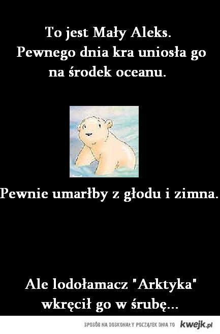 niedźwiedź aleks