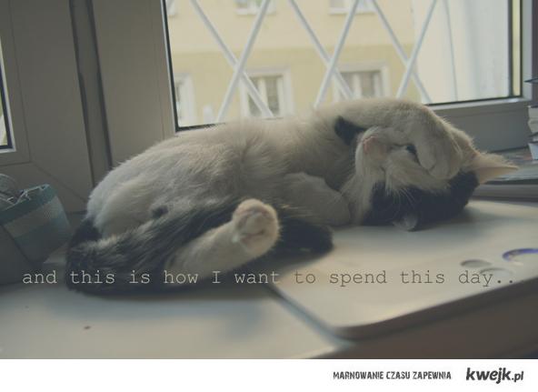 zazdroszczę kotom