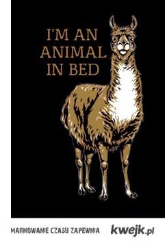 zwierze w łóżku