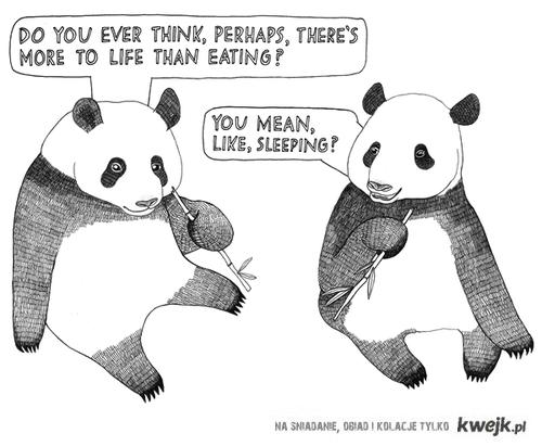 życie pand