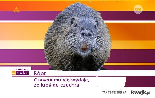Pan Bóbr
