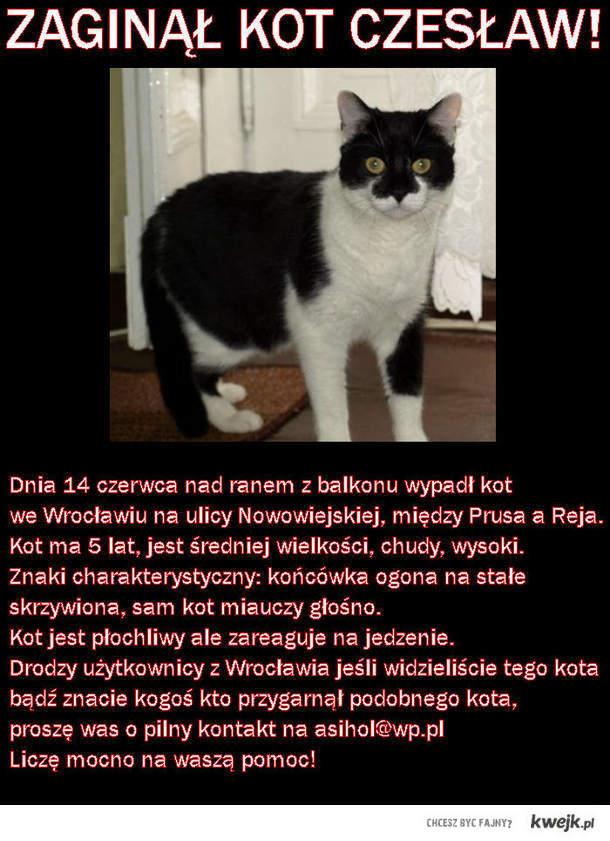 Proszę o pomoc Wrocławian!