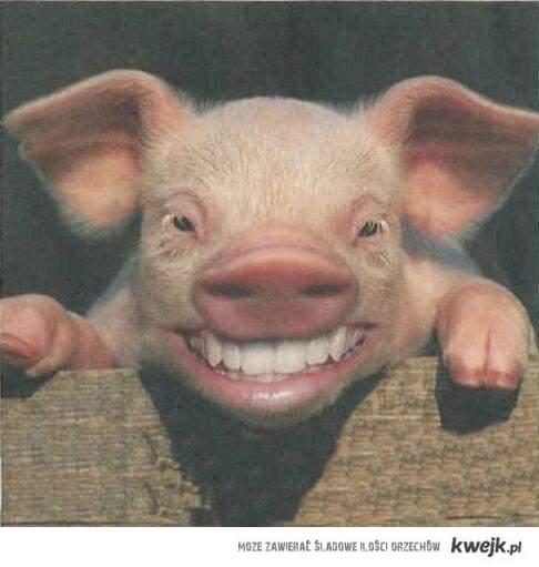 Każdy zna kogoś kto wygląda jak świnia