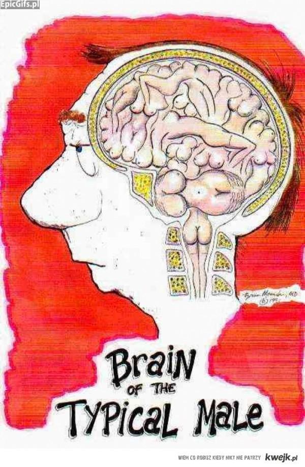 Typowy mózg mężczyzny