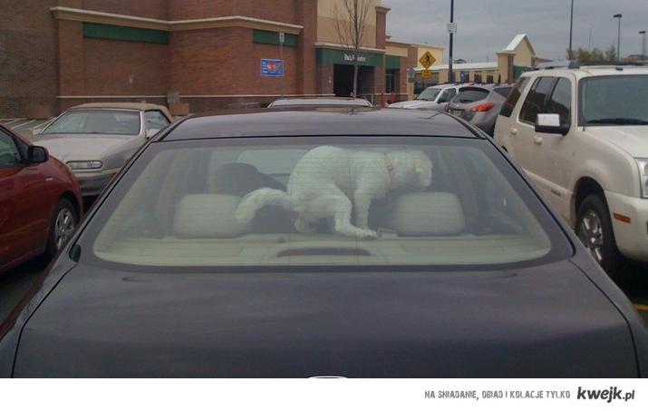 nie zostawiaj tam psa
