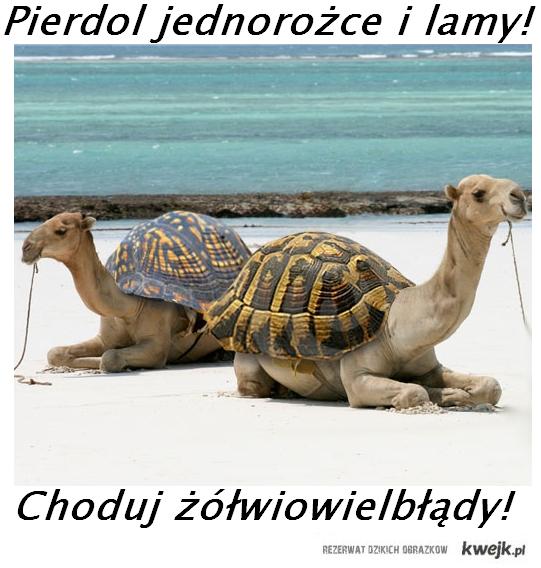 żółwiowielbłady