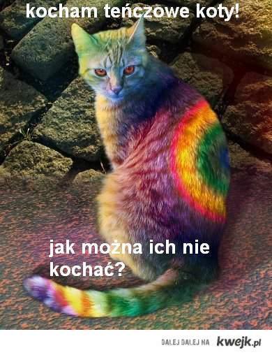teńczowe koty