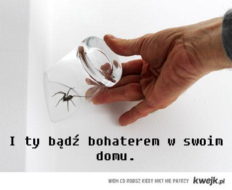 złap pająka