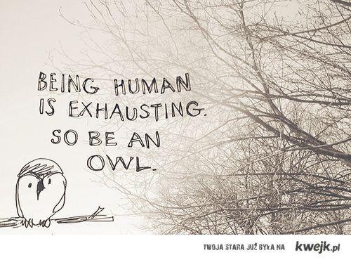 Be an owl.