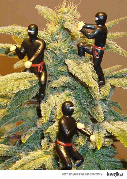 be a weed ninja