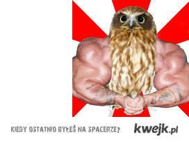 owl on synthol