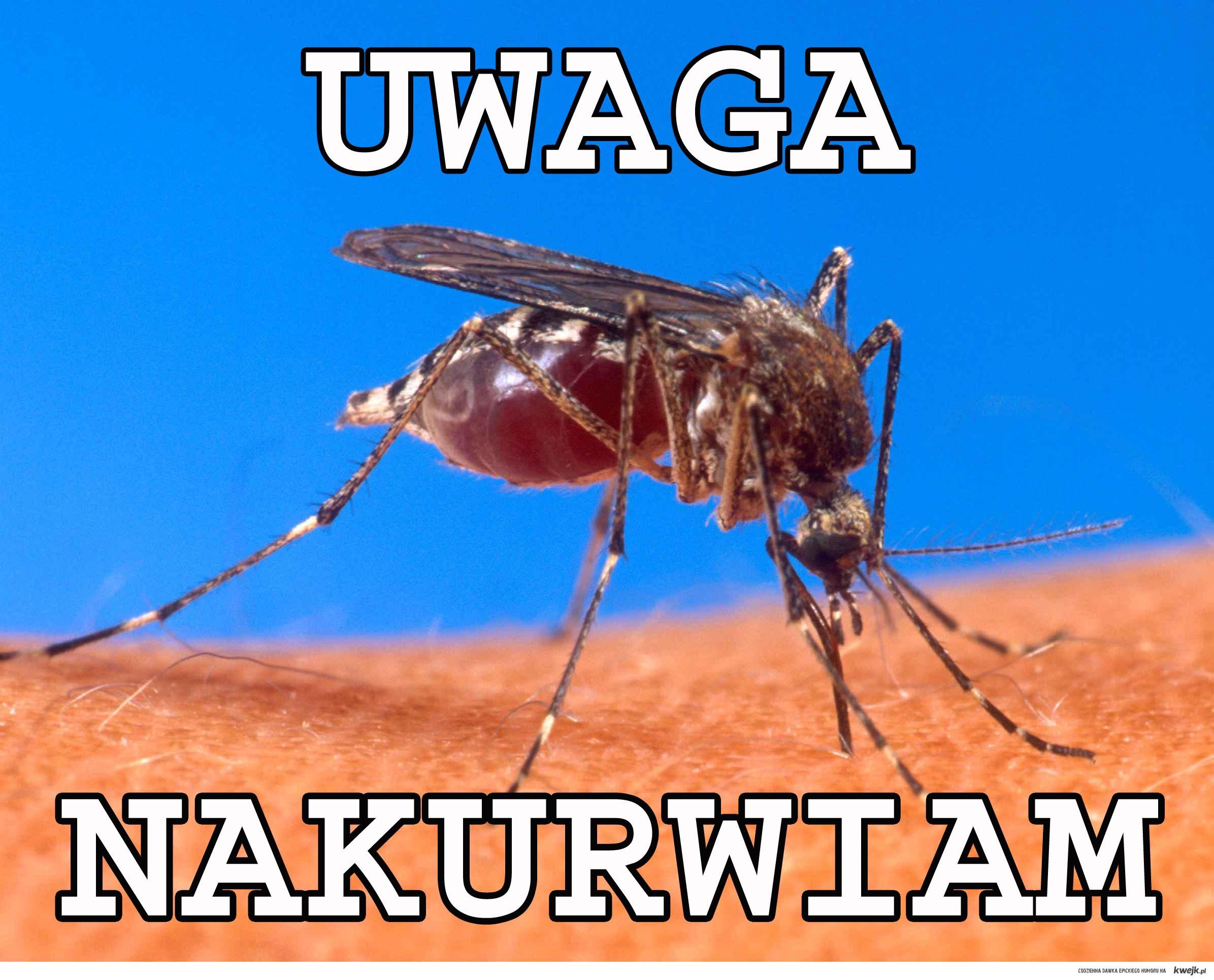 komarywracaja