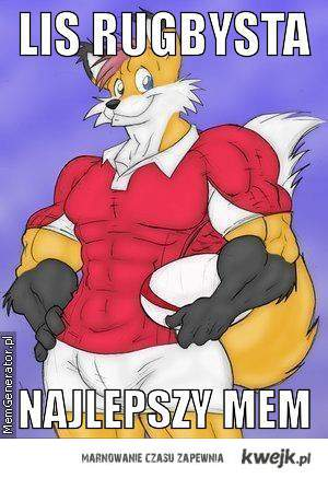 lis rugbysta najlepszy mem