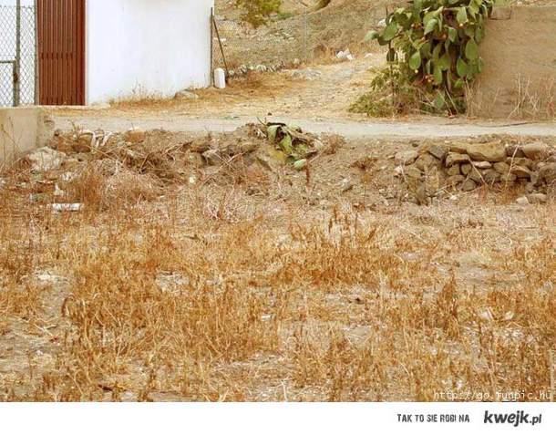 Znajdz kota