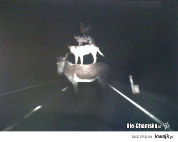 Nocą na drodze...