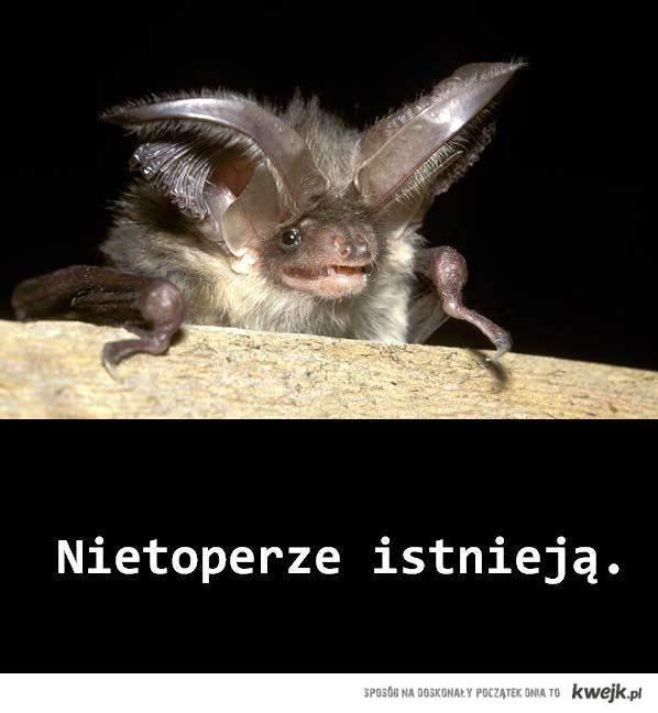 Nietoperze istnieją