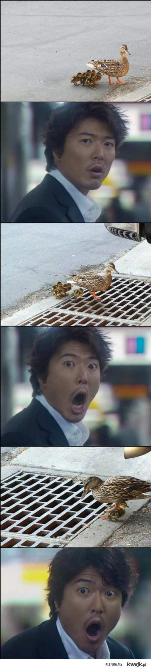 Spadające kaczki