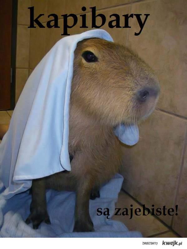 kapibary są zajebiste