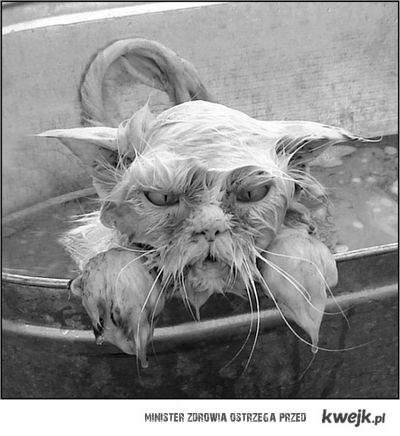 niezadowolony kot