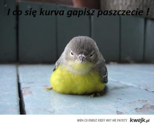 ptak.I co się k.....