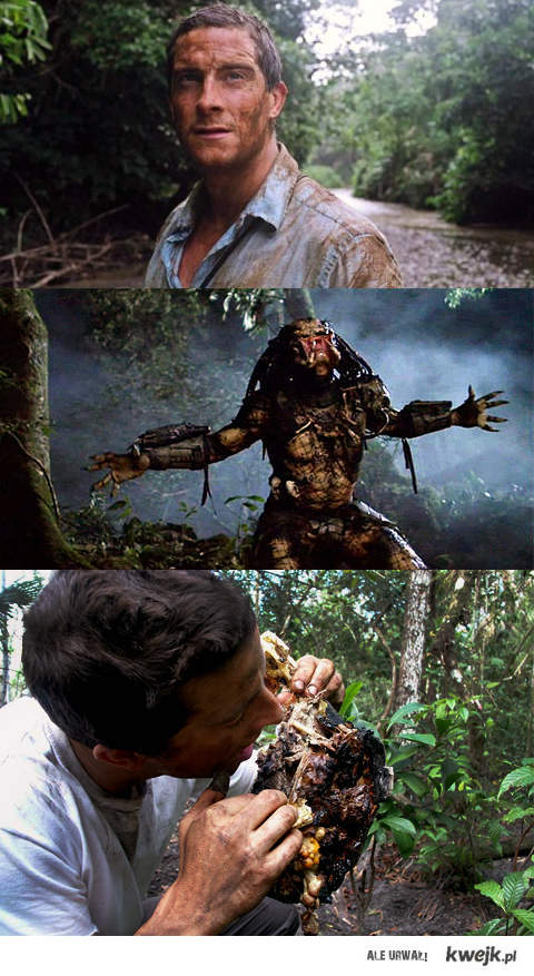 Bear vs. Predator