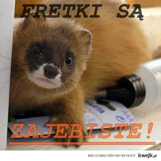 Fretki : - 3