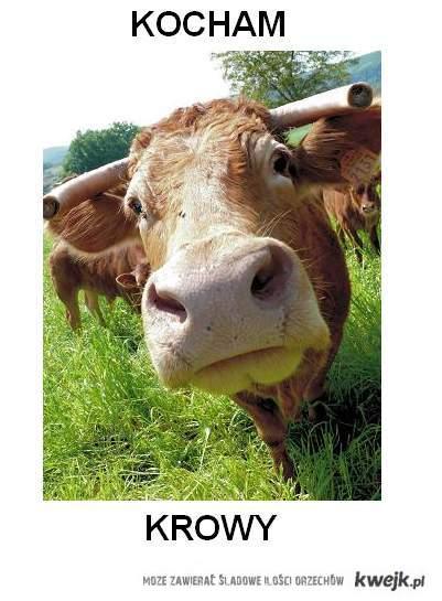Krowy <3