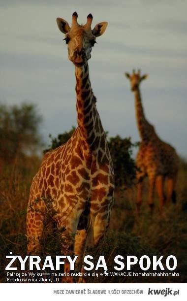 Żyrafki i Wasza nuda :D