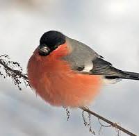 PtakToNieGrzyb
