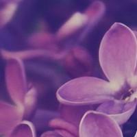 Lilaclover